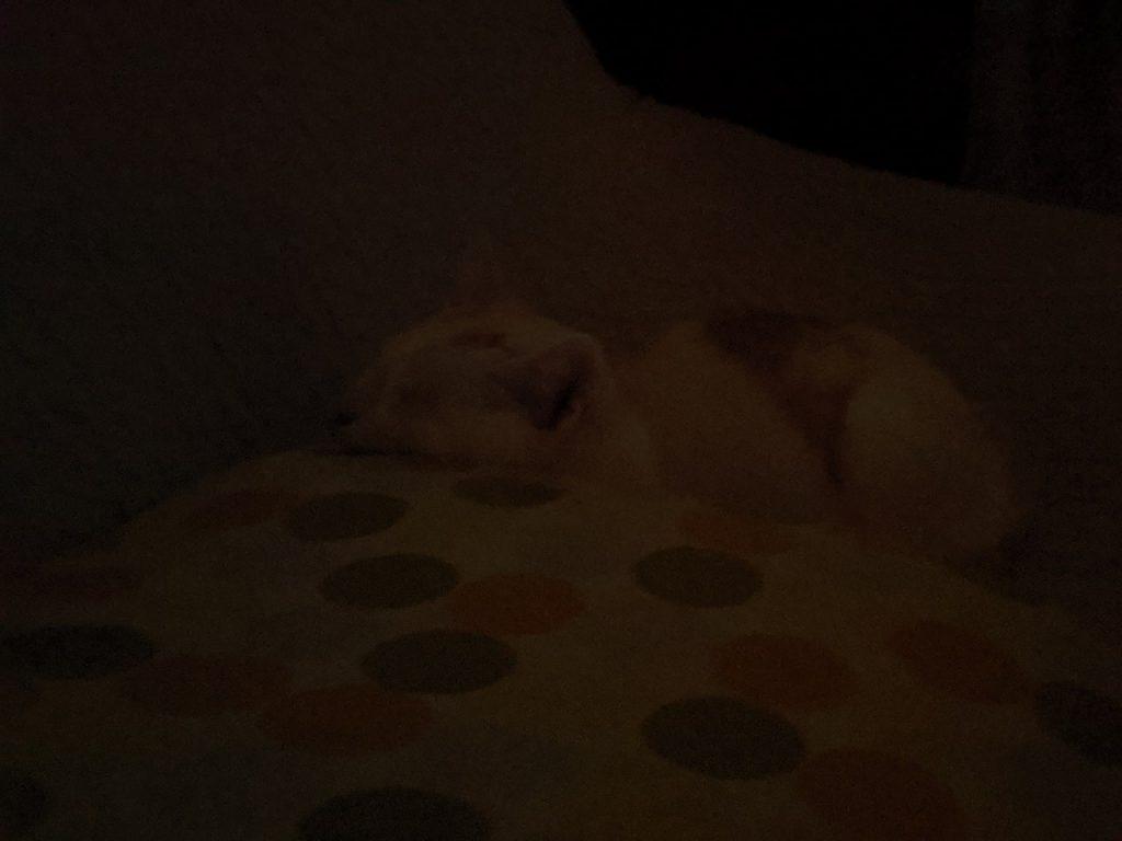 暗い室内で撮った猫の写真