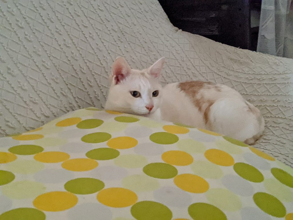 ナイトモードで撮った猫の写真
