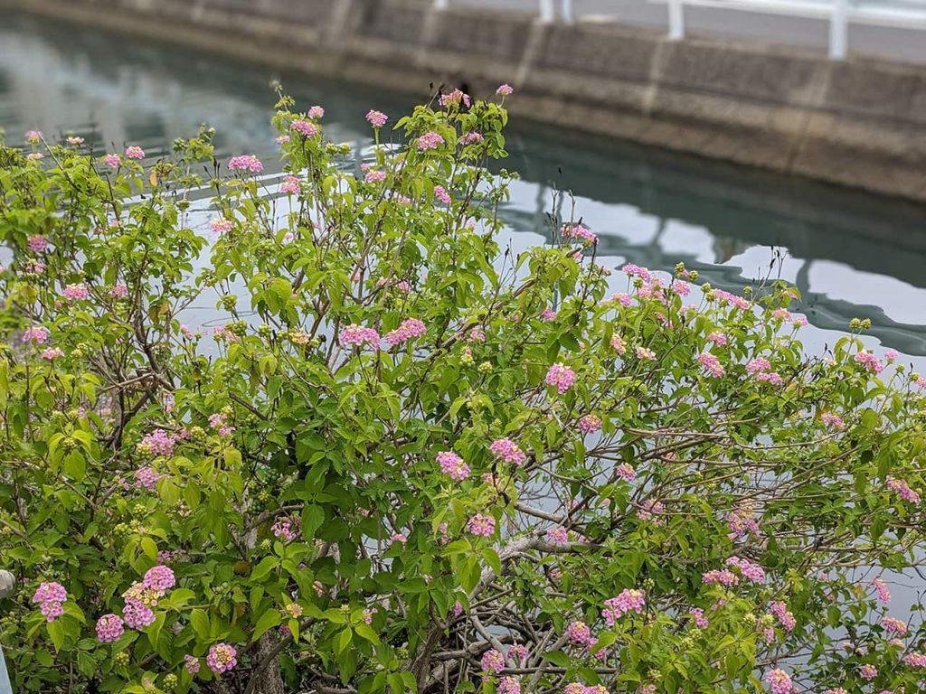 花と背景の川がボケた写真